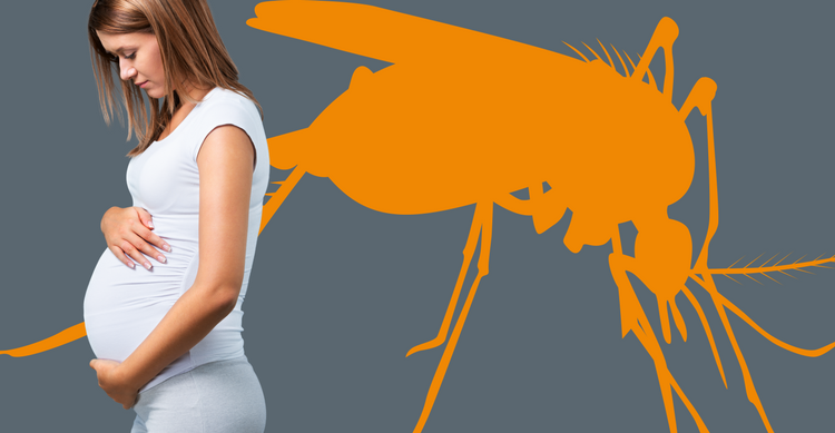 Zika Pregnant Mom Mosquito Pregnancy Prevention Symptoms